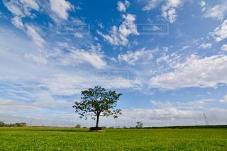 青い空の写真・画像素材[1490689]
