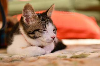 近くに猫のアップの写真・画像素材[1716953]