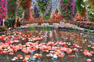 カラフルなフラワー ガーデンの水面の写真・画像素材[1756141]