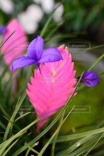 近くの花のアップの写真・画像素材[1764262]