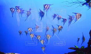 魚群の写真・画像素材[1767354]