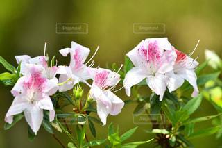 花のアップの写真・画像素材[2091370]