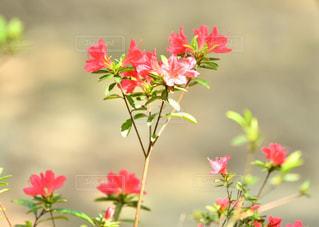 花のクローズアップの写真・画像素材[2091371]