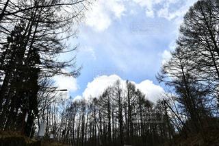高原の樹木の写真・画像素材[2092117]