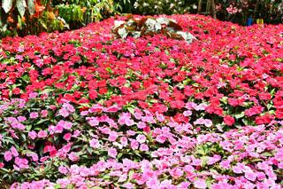 花の写真・画像素材[2122504]