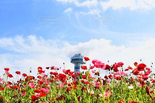 花の写真・画像素材[2125429]