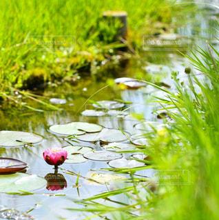 花のクローズアップの写真・画像素材[2128574]