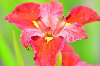 花のクローズアップの写真・画像素材[2170438]