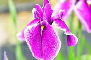 花のクローズアップの写真・画像素材[2170442]