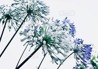 花の写真・画像素材[2300141]
