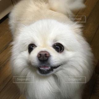 笑顔の写真・画像素材[2357902]