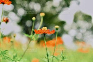 花のクローズアップの写真・画像素材[2377947]