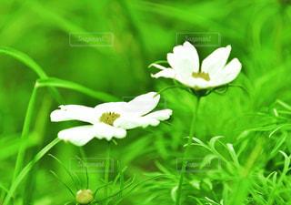 花のアップの写真・画像素材[2378606]