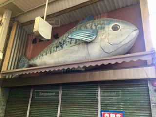 閉店した魚屋さんの屋根から見つめてるの写真・画像素材[1346483]