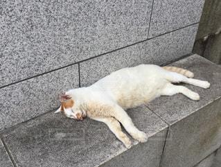 やる気のない猫の写真・画像素材[1362943]