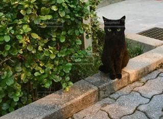 座った黒ネコの写真・画像素材[1364067]