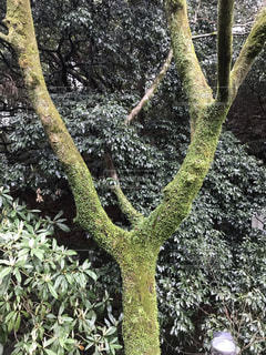 万葉公園の写真・画像素材[1863853]