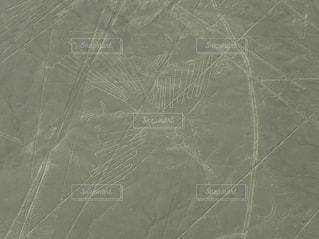ナスカのハチドリの写真・画像素材[1352427]