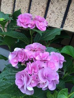 近くの花のアップの写真・画像素材[1356055]