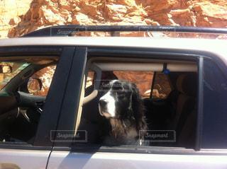 車の窓の外にぶら下がっている犬の写真・画像素材[1362619]