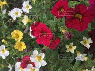 近くの花のアップの写真・画像素材[1365660]