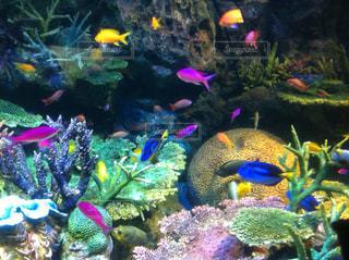 色とりどりの熱帯魚のグループの写真・画像素材[1367831]
