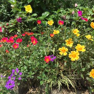 花でいっぱいの花壇の写真・画像素材[2409175]