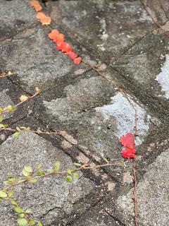 赤いハートの写真・画像素材[2836001]