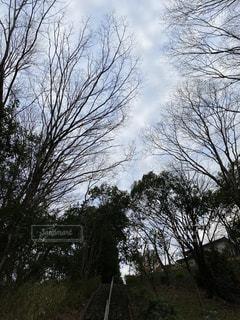 森の中の木の写真・画像素材[2953042]
