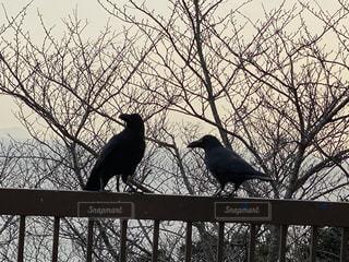ワイヤーフェンスに座っている鳥の群れの写真・画像素材[2990044]