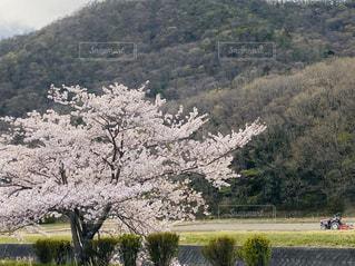 背景に山のある木の写真・画像素材[3095492]