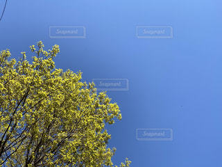 木のクローズアップの写真・画像素材[3101484]