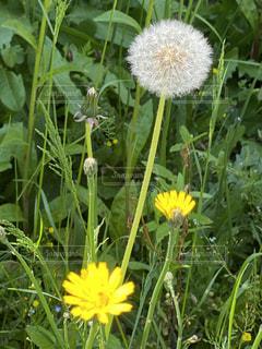 黄色い花の写真・画像素材[3136974]