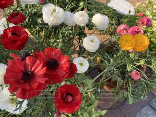 赤い花の上に座っている花の写真・画像素材[3155025]
