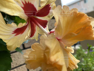 花のクローズアップの写真・画像素材[3501500]