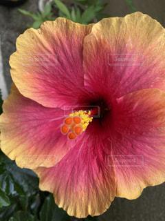 花のクローズアップの写真・画像素材[3501502]