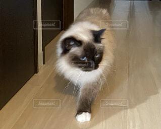 カメラを見ている猫の写真・画像素材[4025270]