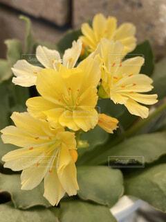 花のクローズアップの写真・画像素材[4355667]