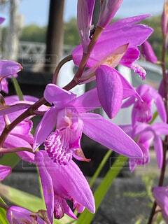紫色の花のクローズアップの写真・画像素材[4355668]