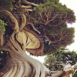 盆栽のうねりの写真・画像素材[1349072]