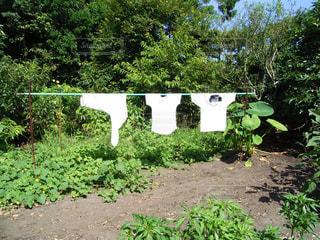 庭の洗濯物の写真・画像素材[1380319]