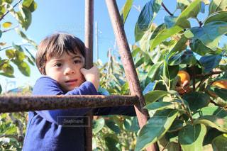 ツリーの横に立っている小さな男の子の写真・画像素材[1381323]