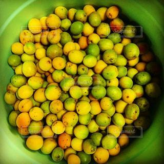 梅の実の写真・画像素材[1359686]