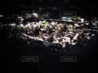 光の中の若い芽の写真・画像素材[1374441]