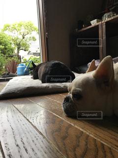 ベッドの上に横たわる犬の写真・画像素材[1352482]