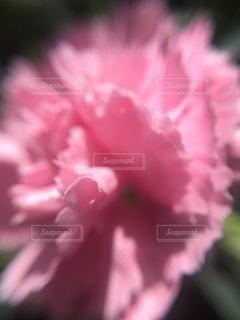 自然の写真・画像素材[82935]