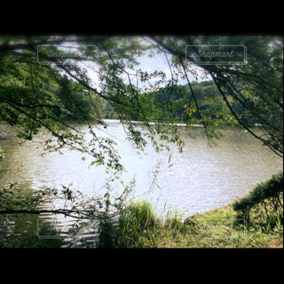 自然の写真・画像素材[178357]