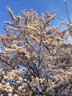 春の写真・画像素材[388397]