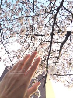 春 - No.388398