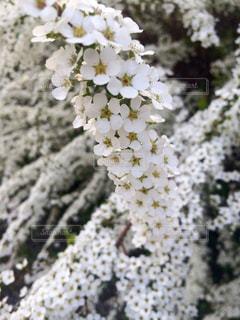 花の写真・画像素材[388406]